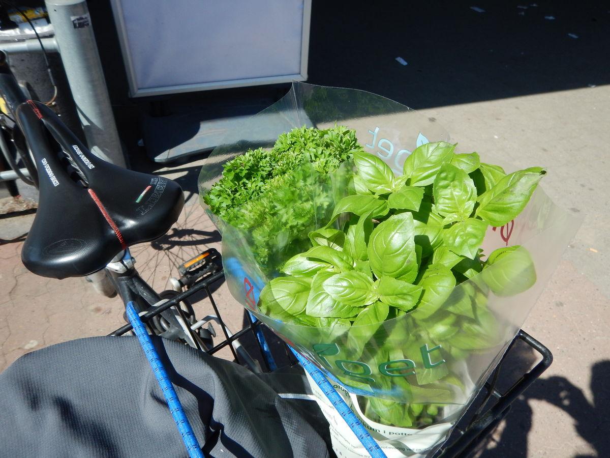 Økologiske urter i cykelkurven.