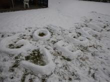 Go Vegan! skrevet med sne på en græsplæne.