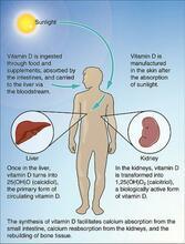 D-vitaminoptagelse