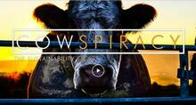 En ko står bag et hegn med ryggen mod solnedgangen. Cowspiracy - The Sustainability Secret