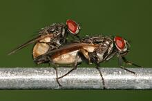 Fluer der hygger sig.