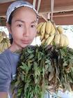 Lek med fantastiske økologiske grøntsager fra bjerget.