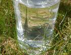 Rent vand i plastflaske, som står på en græsplæne.